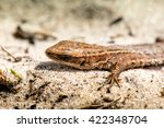 macro shot of a lizard. early... | Shutterstock . vector #422348704