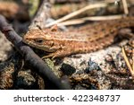 macro shot of a lizard. early... | Shutterstock . vector #422348737
