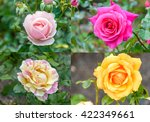 four pictures of rose in one... | Shutterstock . vector #422349661