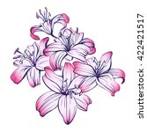 floral blooming lilies hand... | Shutterstock .eps vector #422421517