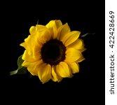 Still Life Sunflower
