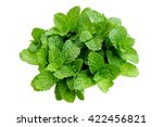 fresh green leaf mint isolated... | Shutterstock . vector #422456821