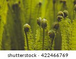 ferns in spring background | Shutterstock . vector #422466769