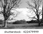 two trees | Shutterstock . vector #422479999