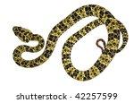 speckled forest pitviper ... | Shutterstock . vector #42257599