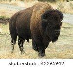Wild Buffalo.  Image Taken...