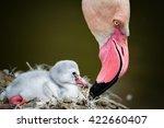 flamingos  phoenicopteridae ... | Shutterstock . vector #422660407