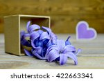 Blue Hyacinth Flowers In Gift...