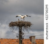 Small photo of Couple of storks in the nest on on the platform at the top of the utility pole - Banya, Bulgaria
