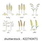 Hand Drawn Cereals And Grains...