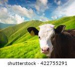 Head of the calf
