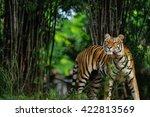 bengal tiger | Shutterstock . vector #422813569