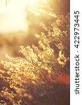 vintage sunny photo of wild... | Shutterstock . vector #422973445