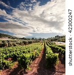 Small photo of dramatic sky on rows of vines at sunset in Nemea, Greece