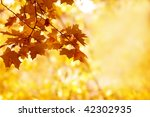 autumn background | Shutterstock . vector #42302935