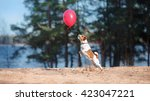 Stock photo dog jack russell terrier jumps in the air to catch flying balloons 423047221
