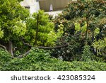 grape vines  saint paul de... | Shutterstock . vector #423085324