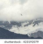 condor looks for prey.... | Shutterstock . vector #423192079