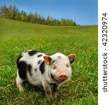 cute spotty piglet | Shutterstock . vector #42320974
