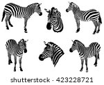 Zebras On A White Background