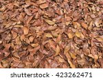 A Pile Of Dry Leave.