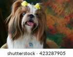 Shih Tzu Dog Sitting In Studio
