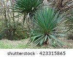 park alley in the botanical... | Shutterstock . vector #423315865