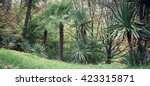 park alley in the botanical... | Shutterstock . vector #423315871