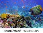 coral reef and tropical fish in ... | Shutterstock . vector #423343804