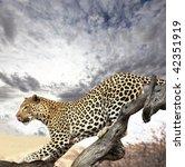 leopard | Shutterstock . vector #42351919