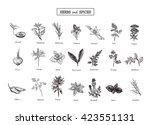 set of herbs and spices in... | Shutterstock . vector #423551131