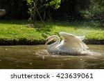 swans duck | Shutterstock . vector #423639061