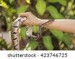 A Poisonous Snake In The Hands...
