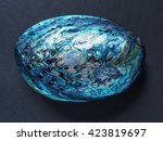 Paua Shell Sea Snail Marine...