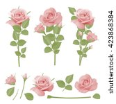collection of pink roses ... | Shutterstock .eps vector #423868384
