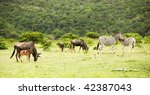 The Flock Of Antelopes Gnu And...