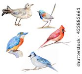 watercolor colored birds on... | Shutterstock . vector #423882661