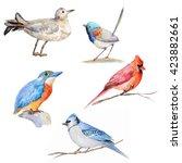 watercolor colored birds on... | Shutterstock . vector #423882661