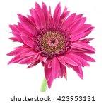 Single Flower Flower Pink...