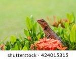 An Asian Chameleon Is Climbing...