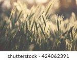 field grass background in the... | Shutterstock . vector #424062391