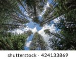 looking up into the treetops of ... | Shutterstock . vector #424133869