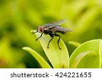 fly on a leaf | Shutterstock . vector #424221655