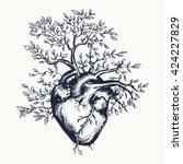 anatomical human heart from...
