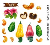cashew  watercolor illustration ... | Shutterstock . vector #424347355