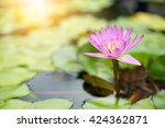 Water Lily With Sun Flare