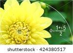Illustration Of Golden Ratio In ...