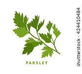 parsley herb  food vector... | Shutterstock .eps vector #424410484