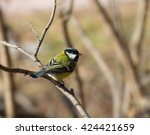 Stock photo birds and animals in wildlife greater titmouse bird sitting on a branch at the beginning of the 424421659