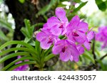 Small photo of Beautiful purple orchid flower in park